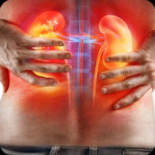 img-kidney